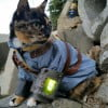 A Fallout cat? Someone is winning the internet