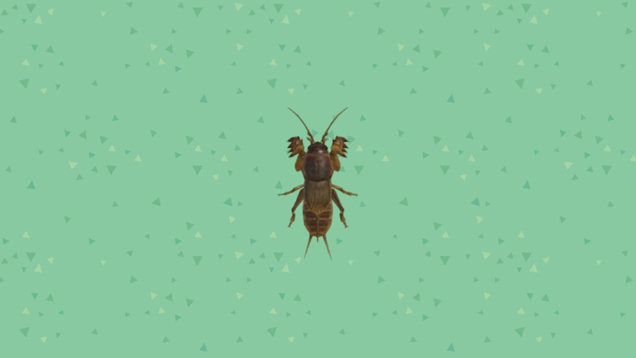 Animal Crossing: New Horizons - Mole Cricket
